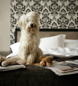 Dog Pees In Owner S Bed Thriftyfun