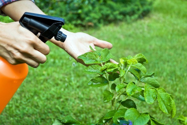 Natural Pesticide Recipes For Vegetable Gardens Thriftyfun