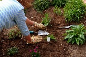 A woman planting a natural garden.