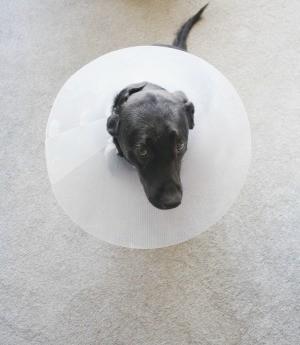Dog Has a Hurt Toenail