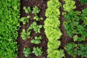 Starting a New Garden