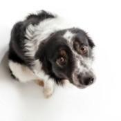Sad dog looking up at its owner.
