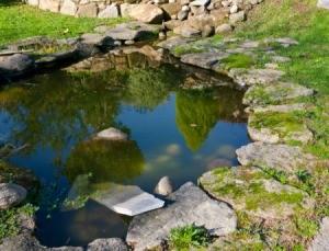 murky pond water