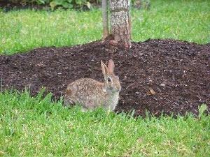 Bunny near tree.