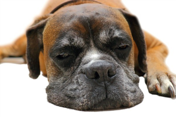 Dog Wont Sleep Through The Night Thriftyfun