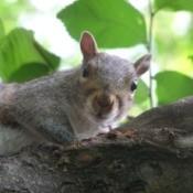 Squirrel sitting.