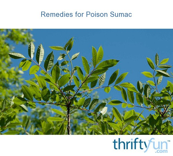 remedies for poison sumac