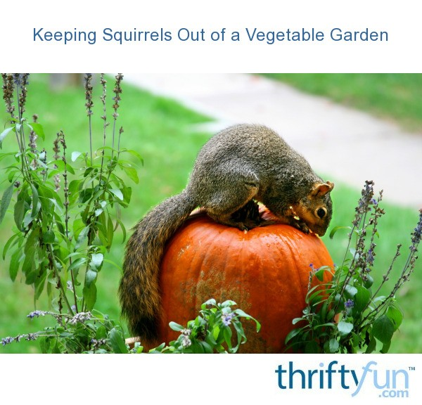 Keeping Squirrels Out Of A Vegetable Garden Thriftyfun