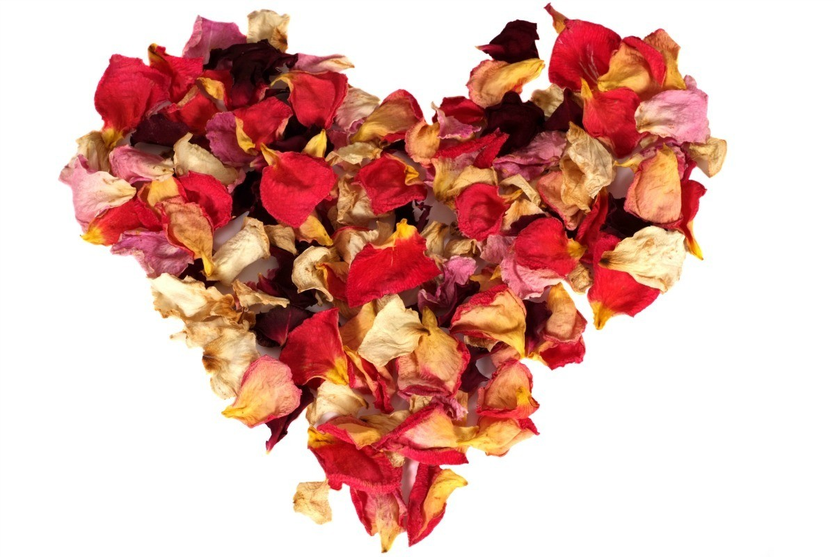 Drying Rose Petals Thriftyfun