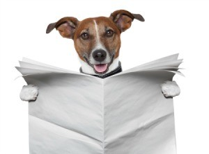 A dog reading a paper.