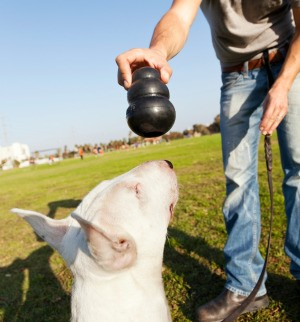 A man giving his dog a Kong dog toy.