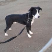 Dog on leash.