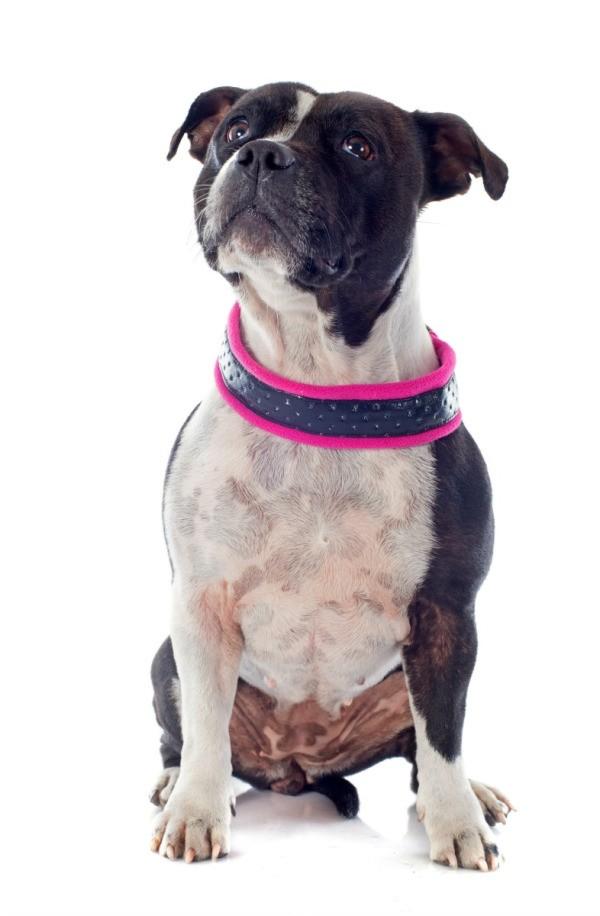 How To Make Own Dog Elizabethian Collar