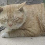 Mr. Wibble (Cat)