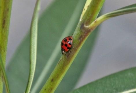 Wildlife: Lady Bug