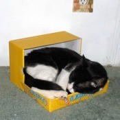 Black and white cat in cardboard box sleeping.