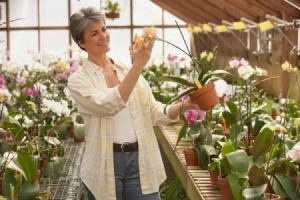 Master gardener in a greenhouse.