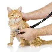 Cat seeing a veterinarian.