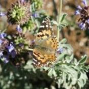 Butterfly Pavilion (Phoenix, AZ)