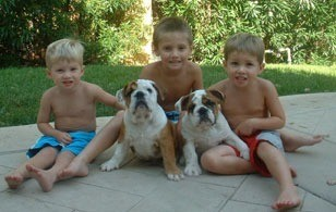 2 bull dogs with 3 boys