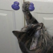 Cat with paw on cabinet knob.