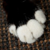 Closeup of cat paw