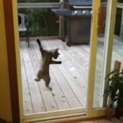 Cat on sliding glass door screen.