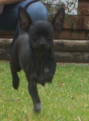 Roxy running.