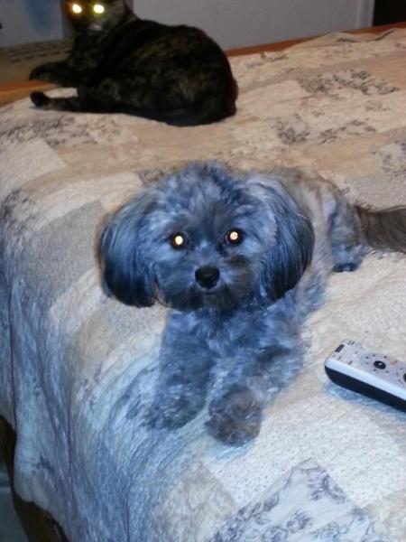 Small black dog.