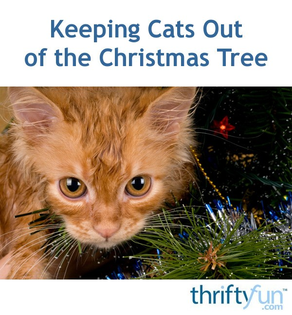 Keep Cat Away From Christmas Tree: Keeping Cats Out Of The Christmas Tree