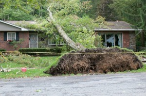 A fallen tree on a house.