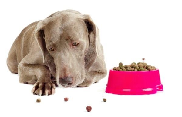 dog wont eat food