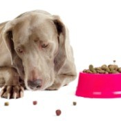 Dog Won't Eat