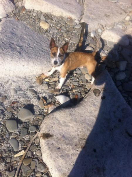 Max on dry creekbed like area.