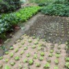 A nicely planted organic vegetable garden.