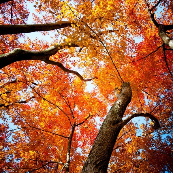 Photos Of Autumn Trees