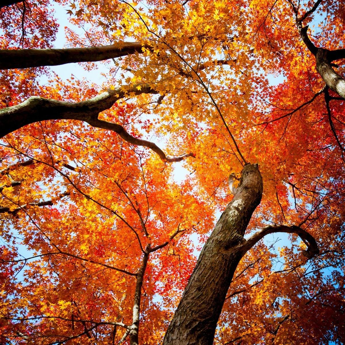 Photos of Autumn Trees | ThriftyFun