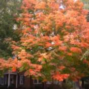 Fall Colors (Warrenton, NC)