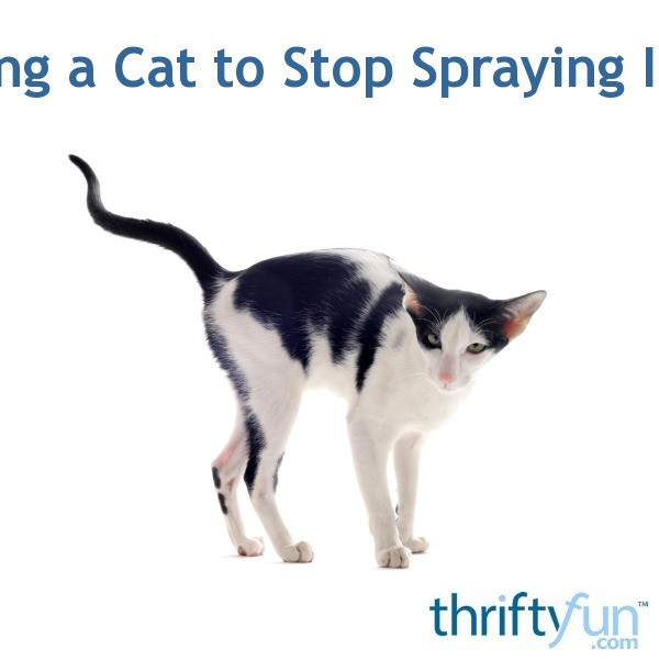 How Do I Get My Cat To Stop Spraying