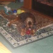 Dog lying on throw rug.