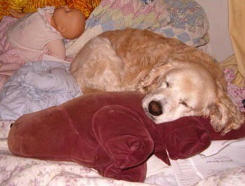 Sleeping with head on stuffy.