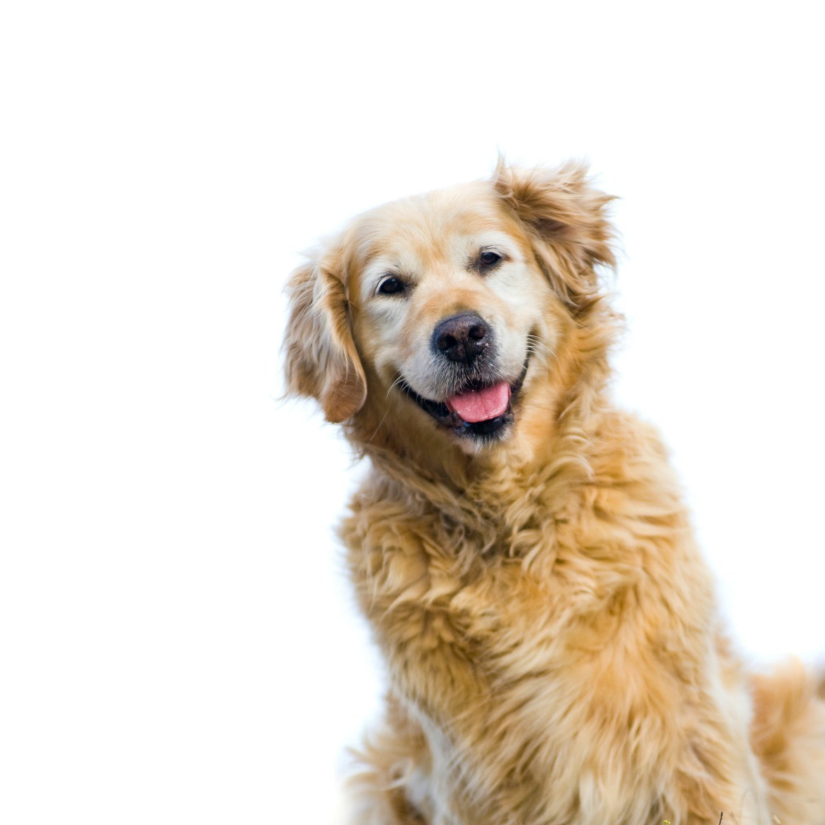 Remedies For Hot Spots On Dogs Thriftyfun