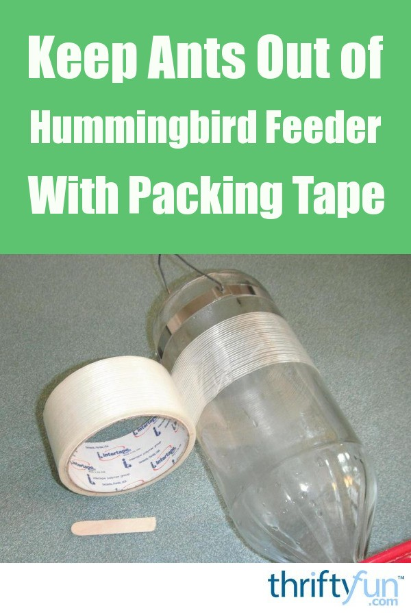packing tape to keep ants out of a hummingbird feeder thriftyfun. Black Bedroom Furniture Sets. Home Design Ideas
