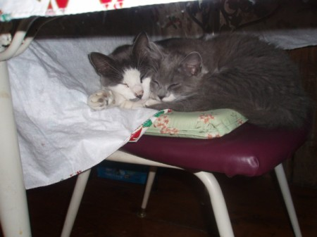 Annie and Fuzzy snuggling on chair.
