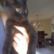 Hand holding a black kitten.