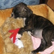 Sleeping puppy.