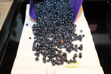 drying blueberries on paper towel