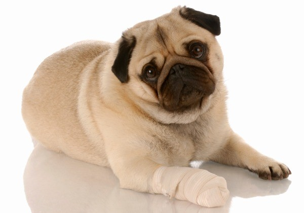 Dogs Paw Bleeding How To Make Stop