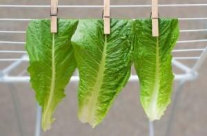 Drying Lettuce Leaves