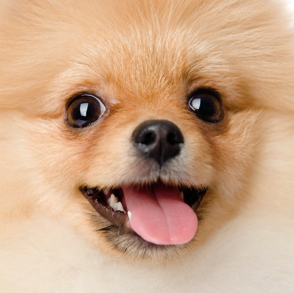 Pomeranian Food Recipes